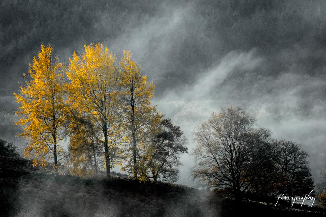 Landscapes -30
